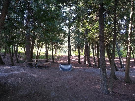 Carp Lake, MI: View of site 141 from camp road