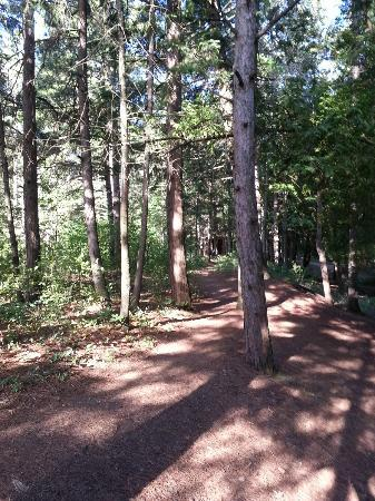 Wilderness State Park: Trail to restroom at the back of site 141