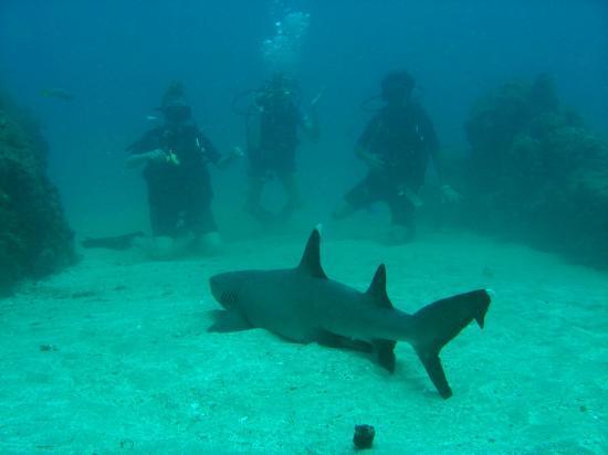 Mad About Diving: En posición frente al tiburón