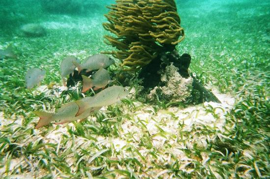 Athens Gate Beach Resort: Snorkeling
