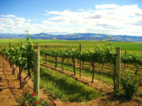 Sawtooth Winery: Stunning view of the Sawtooth Vineyard and Owhyee Mountains