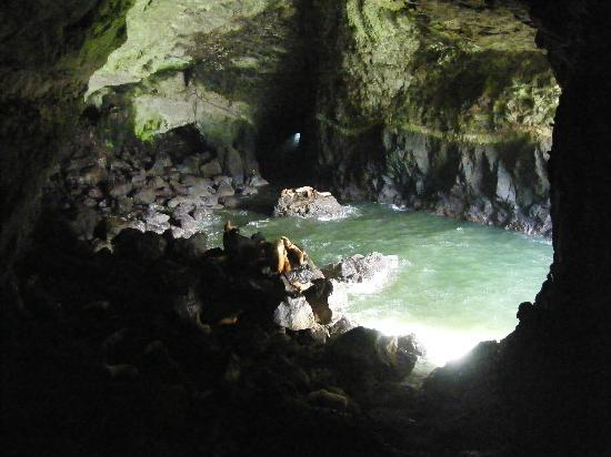 Sea Lion Caves - inside cave