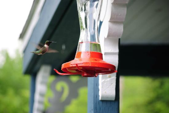 Cabot Trail Motorcycle Retreat: Our resident humming bird