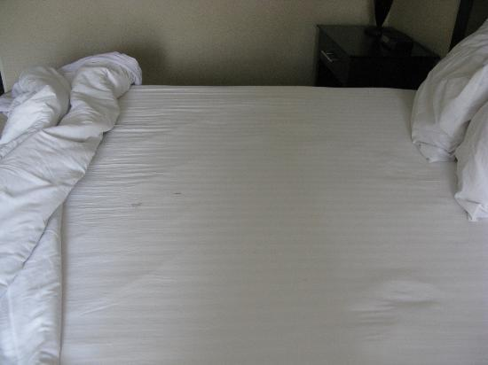 Clarion Inn: dry crusty stain with pubic hair on bed
