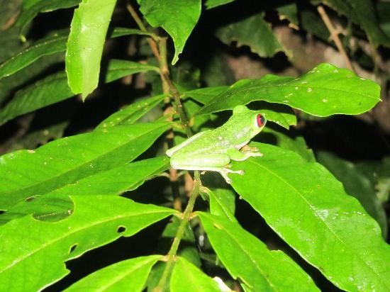 The Night Tour with Tracie The Bug Lady: tree frog