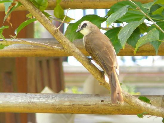 Segara Agung Hotel: Bird life in the grounds