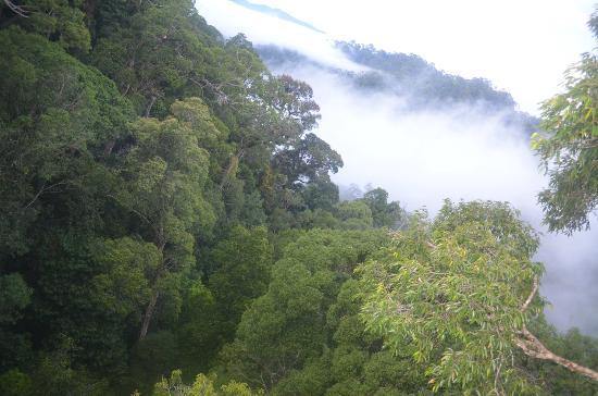 Ulu Ulu National Park Resort: View from Canopy Walk