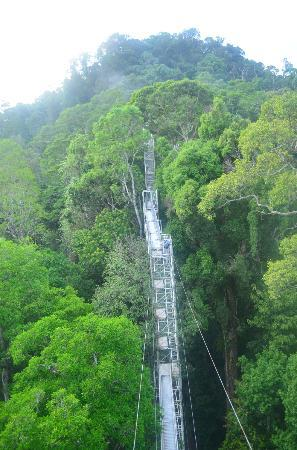 Ulu Ulu National Park Resort: Canopy Walk