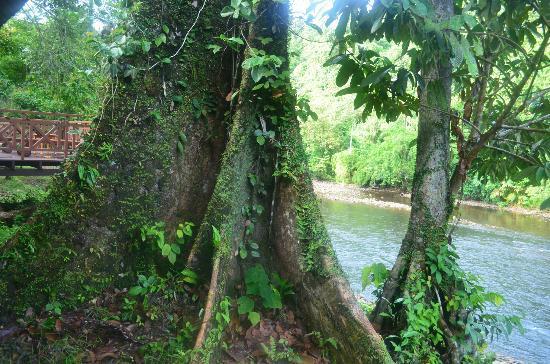 Ulu Ulu National Park Resort照片