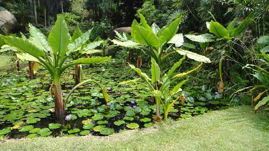 Seychelles National Botanical Gardens: water plants