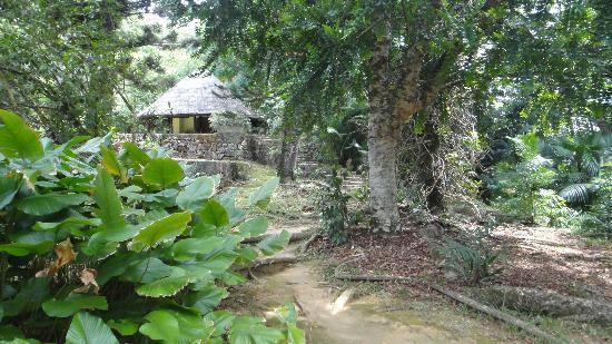 Seychelles National Botanical Gardens: walking between the old trees 