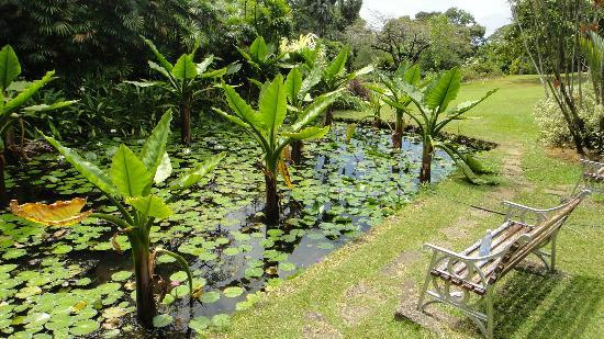 Seychelles National Botanical Gardens: stroll around without rushing