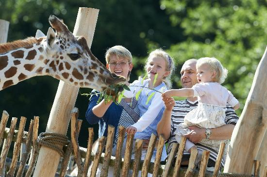 odense zoo case study Rip marius the giraffe, we hardly knew ye many experts are leery of the way the copenhagen zoo has handled the case of 2-year-old marius the giraffe.