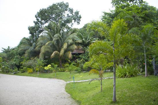 棕櫚海灘度假村照片