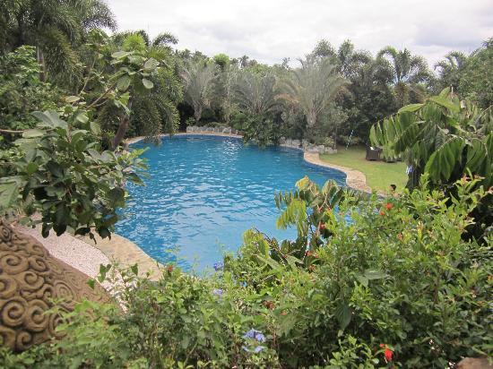 سينتاي كوريتوس جاردن: Pool 