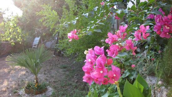 B&B Villa Dubrovnik Garden: Garten