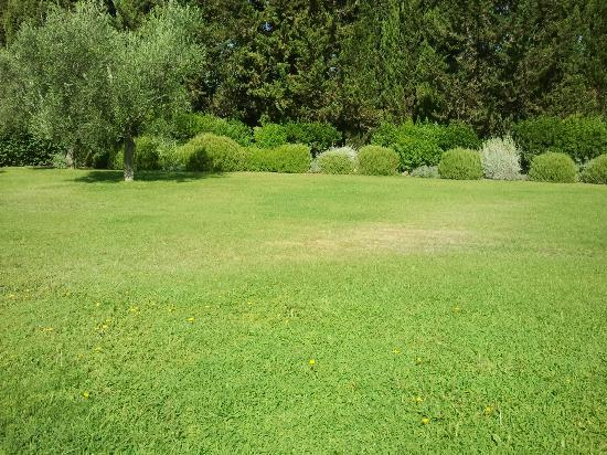 Ghiaccio Bosco: giardino