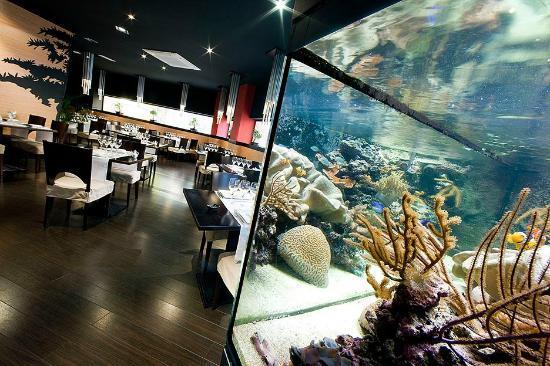 Restaurante Asiatico Ninsei: Pecera con peces exóticos