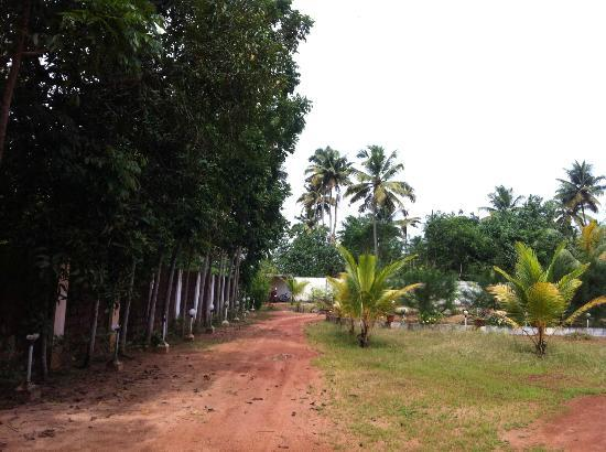 Marari Fishermen Village Beach Resort: Road to Resort