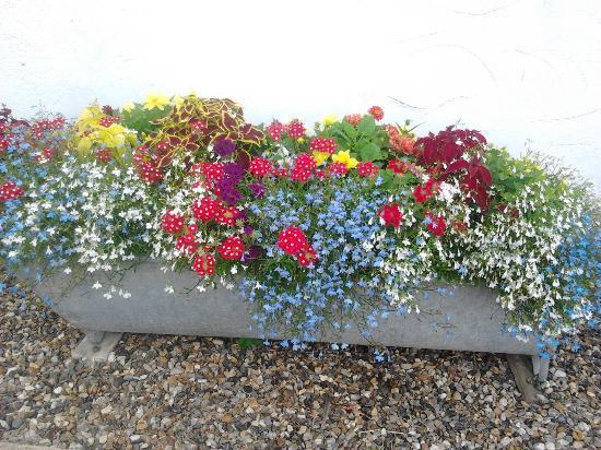 Sibton White Horse Inn: Neil's beautiful flowers