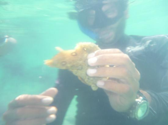 FatCat Ocean Adventures: Our 'guide' picked up a sea-horse whilst we were snorkelling and made it pee!! LOL!!