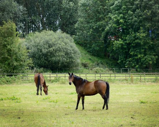Ballycanal Self Catering: View of horses from Ballycanal