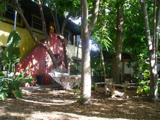 Everglades International Hostel: Hammocks and rear of main building