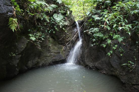 El Remanso Lodge: Natural Waterfall in the Forest - seen on the Short Hike (Just 10 min walk from Main Lodge)