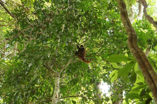 El Remanso Lodge: A short walk and look a Monkey!!