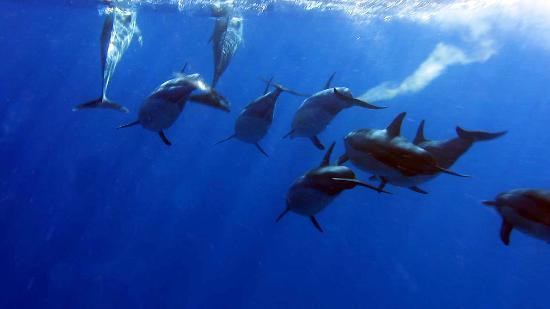 Tamarin Bay: gioco dei delfini 