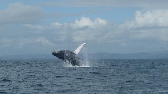 Nosy Boraha, Madagaskar: Baleine !