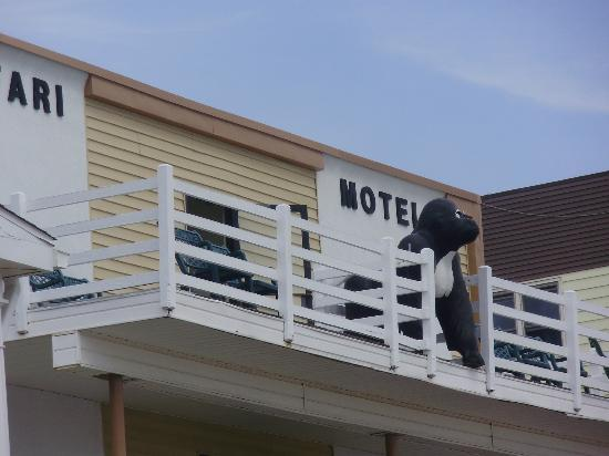 Safari Motel Boardwalk: top deck