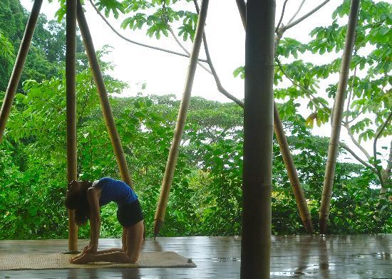 Finca Exotica Ecolodge : Yoga with birds
