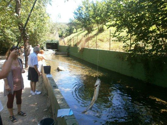 Soto De Agues, Spain: Pescando las truchas