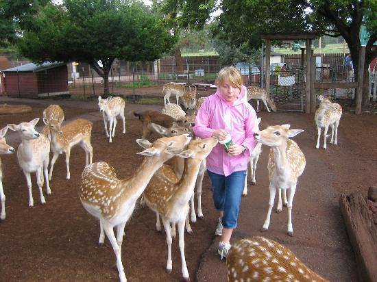 Grand Canyon Deer Farm: How fun is this?