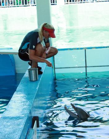Clearwater marine aquarium printable coupons