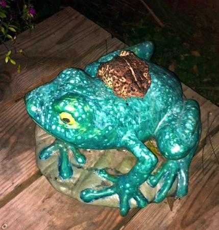 Hoffman's Pottery: frog friends