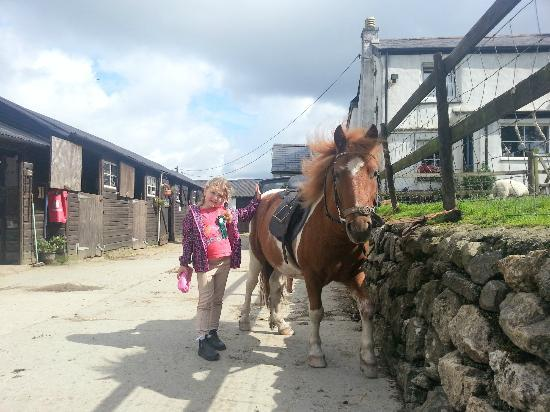 Cholwell Riding Stables: My Daughter With Spud