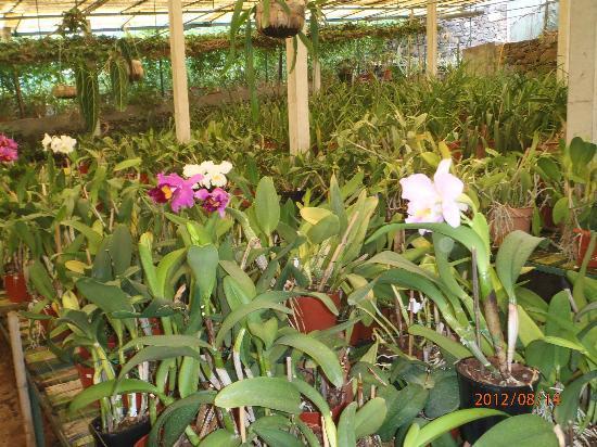 Quinta do Boa Vista : Puede comprar Orquideas para plantar por 2,5€