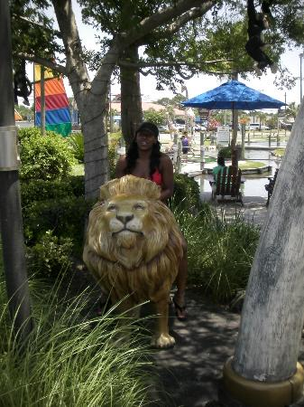 Coconut Creek Family Fun Park: beware of jungle animals!!