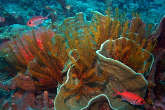 Cabrits Dive Centre: Healthy reefs