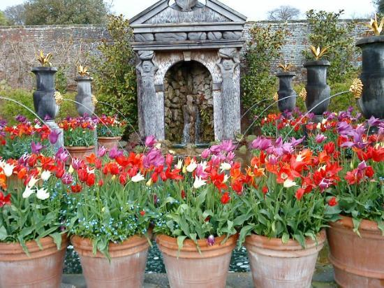 Arundel Castle and Gardens: Just a few of the tulips on display