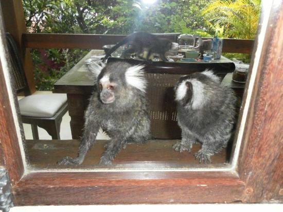 Pousada Terra dos Goitis: los monitos te dan los buenos días en la ventana de la cocina