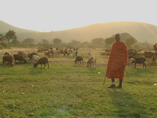 Masai Mara Manyatta Camp : a proximité
