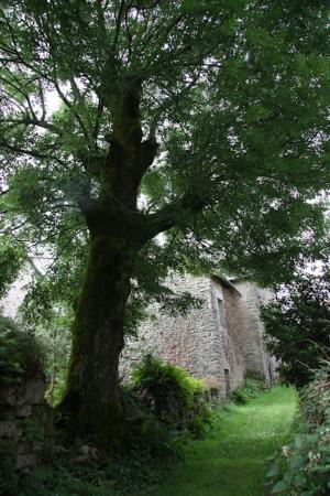 Gite et Chambres d'Hotes de Lasgorceix : en bas du gîte
