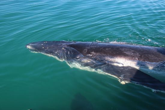 Pacific Whale Foundation: Lazing past the boat