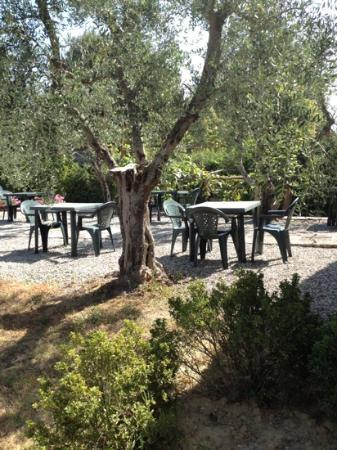 Fattoria Argiano in Chianti : outdoor breakfast area