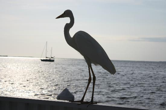 Amy Slate's Amoray Dive Resort: Some of the Wildlife around