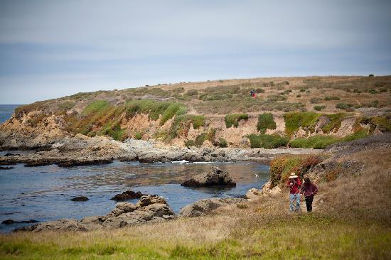 Cambria, CA: Hiking at the Fiscalini Ranch Preserve