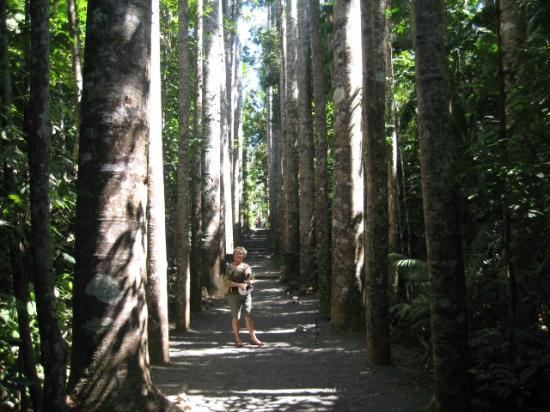 Paronella Park: Beautiful mature trees